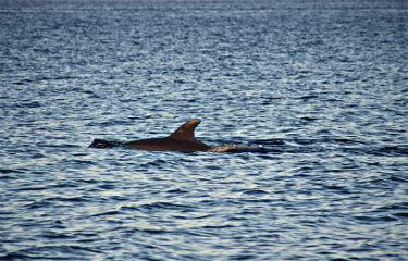 nature deepbluesea naturesbeauty dolphin smallandcalmondulation