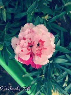 nature flower byme back