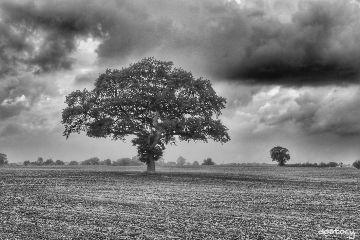 photography tree hdr blackandwhite myphoto