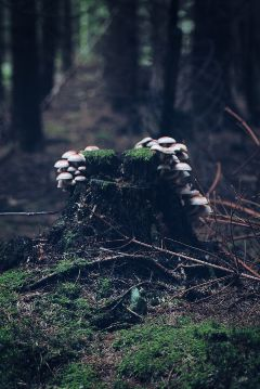 freetoedit mashrooms forest myoriginalphoto
