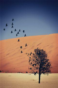 freetoedit birds tree desert spirits