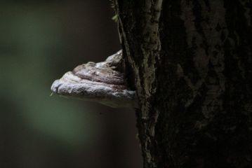 freetoedit mashroom tree forest myoriginalphoto