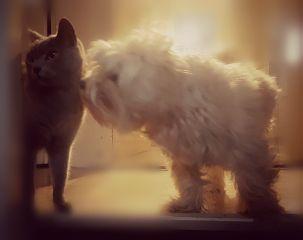 cat dog catsofpicsart catlover catsanddogs