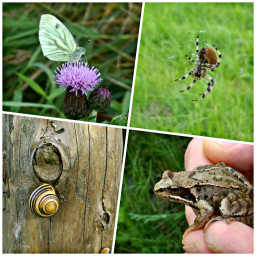 collage naturephotography petsandanimals autumn september2017