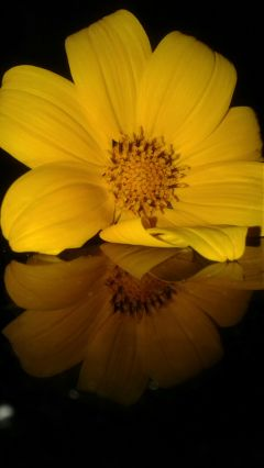 freetoedit flower yellow beautiful miror