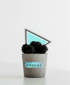 myedit fastforward friday plant minimalism freetoedit