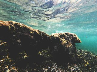 riff diving