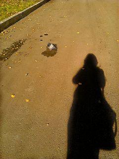 photography autumn shadow bird freetoedit