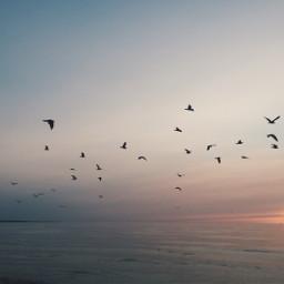 freetoedit birds seagulls sunset water
