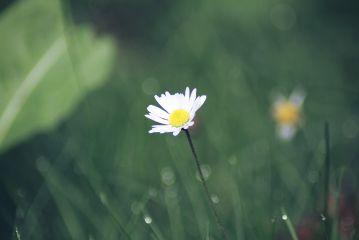 freetoedit daisy