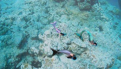 mermaid freetoedit coralreef mermaids