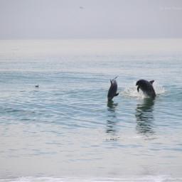freetoedit photography dolphin sea seashore