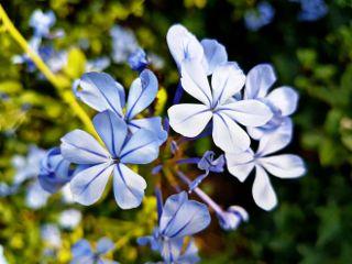 photography nature flowers naturephotography emotions freetoedit