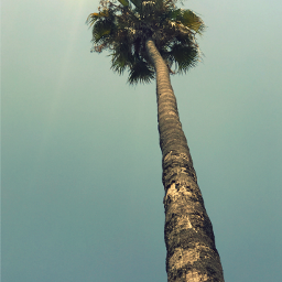 nature palmtree againstthesky brightsunnylight naturesbeauty