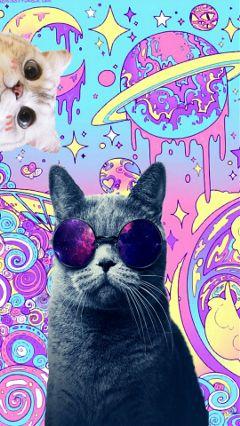 freetoedit kittenstickerremix