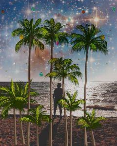 treestickers palmtrees beach freetoedit