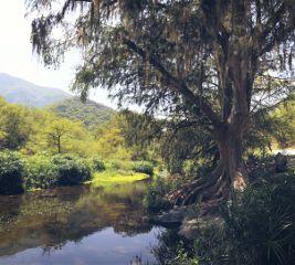 freetoedit nature photography landscape forest