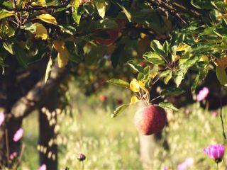 freetoedit nature photography copyspace apple