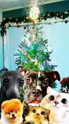 freetoedit christmastree dogs cats silly