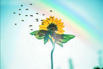 sunflower bee sky girasol yellow freetoedit