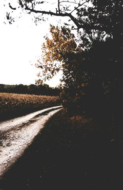 road roads trees leafs autumn