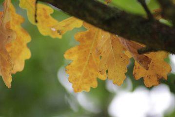 freetoedit leafes autumn