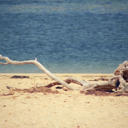 nature oldtreetrunk seawater driedseaweeds shells