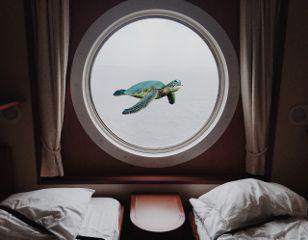 shipviewremix freetoedit remix cabin turtle