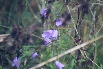freetoedit flowers autumn