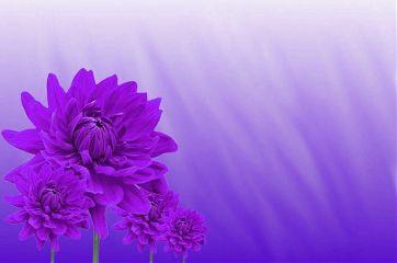 freetoedit background nature flower floral