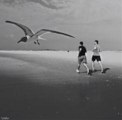 dpcrunning onthebeach seagullinflight myoriginalphoto