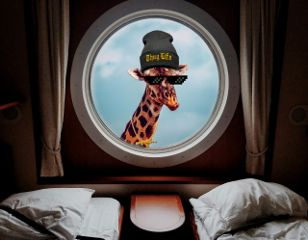 freetoedit funny surreal window giraffe