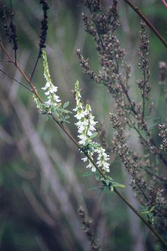 freetoedit flower autumn