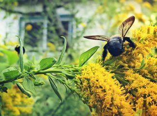 freetoedit mypic flowers bee