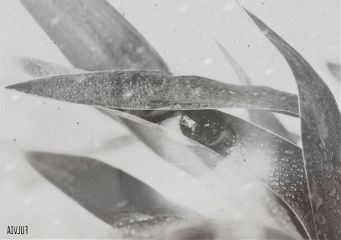 darkart doubleexposure editstepbystep madewithpicsart eyes
