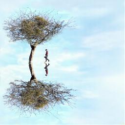 freetoedit trees treescape treesoflife reflection