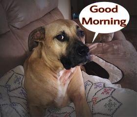 freetoedit goodmorning dogsofpicsart dogs doglover
