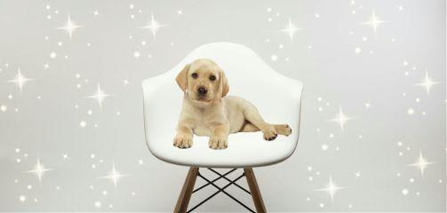 doglove freetoedit