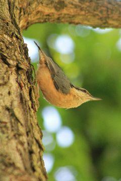 freetoedit bird nature bokeh photography
