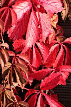 freetoedit autumnleaves