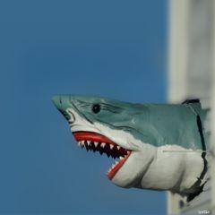 freetoedit shark oceancitymaryland myoriginalphoto