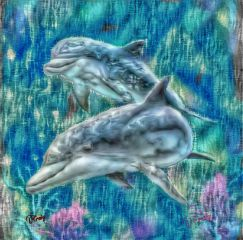 freetoedit dolphin freedom
