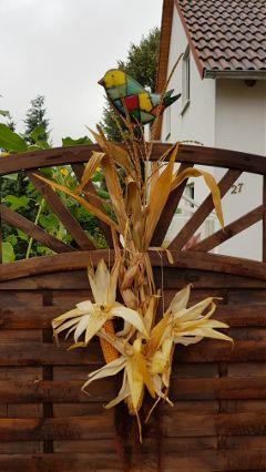decoration creative creativity corn wheat