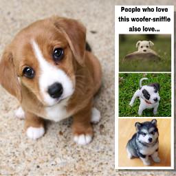 freetoedit puppies puppy alsoliked dogsofpicsart