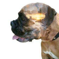 mydog myinspiration mylove doubleexposure myedit