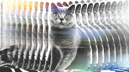 freetoedit nevertoomanycats cat colorsplash motioneffect