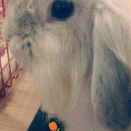 freetoedit bun bunny tulip cute