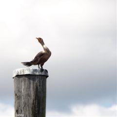 dpcwingedthings duck freetoedit myoriginalphoto