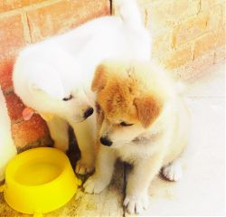 dogsofpicsart freetoedit