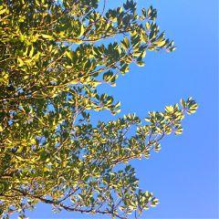 tree sunlight sweetdreams thinking nostalgic